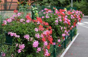 Cérémonie récompense fleurissement @ Maison pour tous - Danjoutin